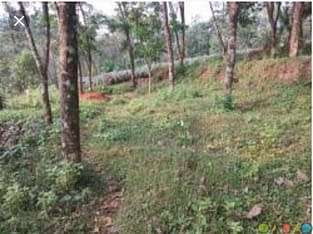 Property for sale in kottayam