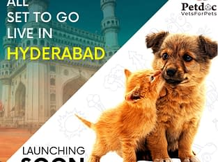 dogs for sale in hyderabad