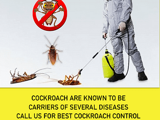 MM Pest Control Service In India