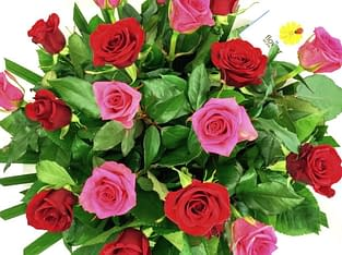 Mend Relations with Flower Delivery In Bangalore
